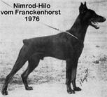 Nimrod Hilo vom Franckenhorst