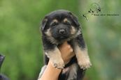 Puppy Litter C