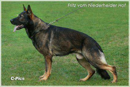 Fritz vom Niederheider Hof