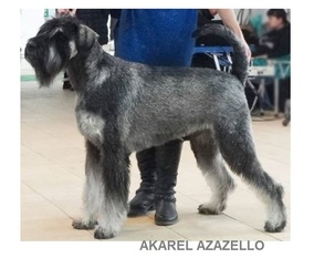 Akarel Azazello