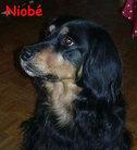 Niobe (Kuncewicz) - ECGA