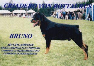 Bruno (AERCAN/LER 6509)