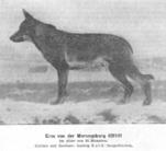 Eros von der Morungsburg