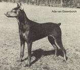 Ada van de Essenburcht