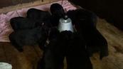 Möckels und Panchos Babys