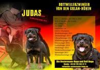 Judas von den Golan-Höhen