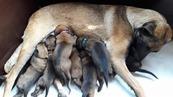 Pups Myra & Arco 2 weken