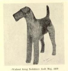 Walnut King Nobbler