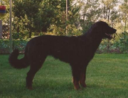 Conny vom Hundsbühl