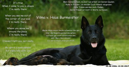 Vilma vom Haus Burmeister
